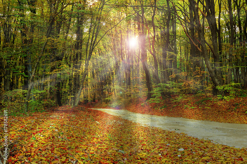 Foto op Canvas Weg in bos rays of sunlight through the forest