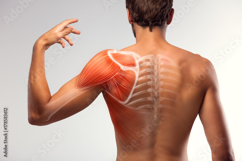 Man view from back. Blades, shoulder and trapezoid illustration. Tapéta, Fotótapéta