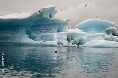 Foto op Canvas Noord Europa Panoramic Jokulsarlon, Typical Icelandic landscape, a wild nature of seals and icebergs, rocks and water.