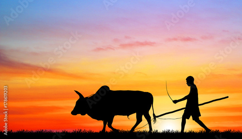 Poster Rose clair / pale silhouette man with a cow walks on the beach