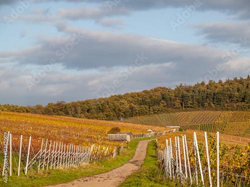 Zdjęcie XXL Winnica na jesieni