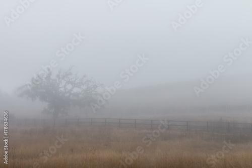 Plakat Dąb w mgle. Brązowe pole jest na pierwszym planie. Dębowe drzewo życia jest spowite mgłą po lewej stronie. W tle widać winnicę.