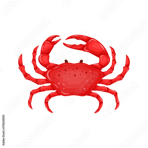 Flat red crab isolated on white background - vector illustration Canvas Print