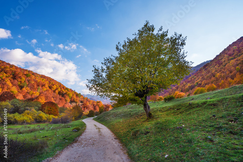Fototapeta The autumn with foliage in the National Park of Abruzzo, Lazio and Molise (Italy) - An italian mountain natural reserve, with little old towns, the Barrea Lake, Camosciara, Forca d'Acero, Val Fondillo