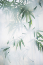 Green Bamboo In The Fog With S...