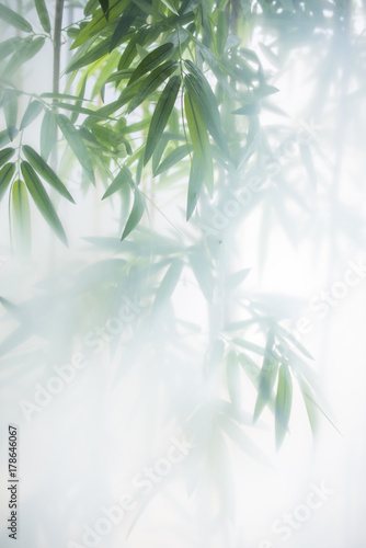 Green bamboo in the fog with stems and leaves behind frosted glass - 178646067
