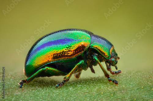 Canvas Print Extreme magnification - Green jewel beetle