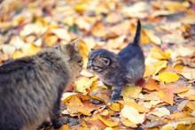 Cat Mother And Her Little Kitt...