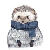 Cute watercolor hedgehog - 178662287