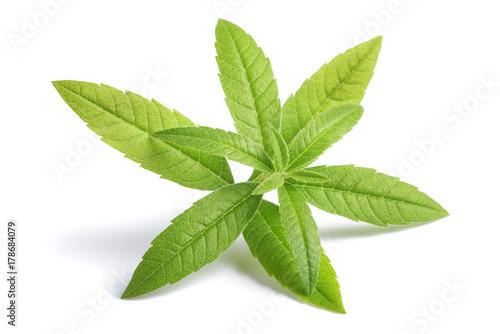 Foto auf AluDibond Aromastoffe Lemon Verbena (beebrush)
