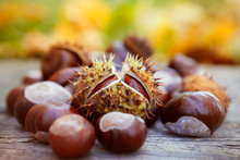 Chestnuts, Horse Chestnut, Aes...