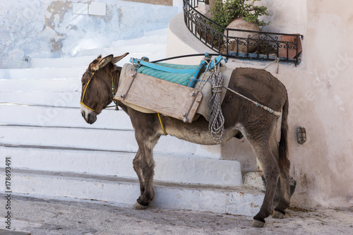Esel in Santorin