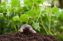 Mole And Molehill