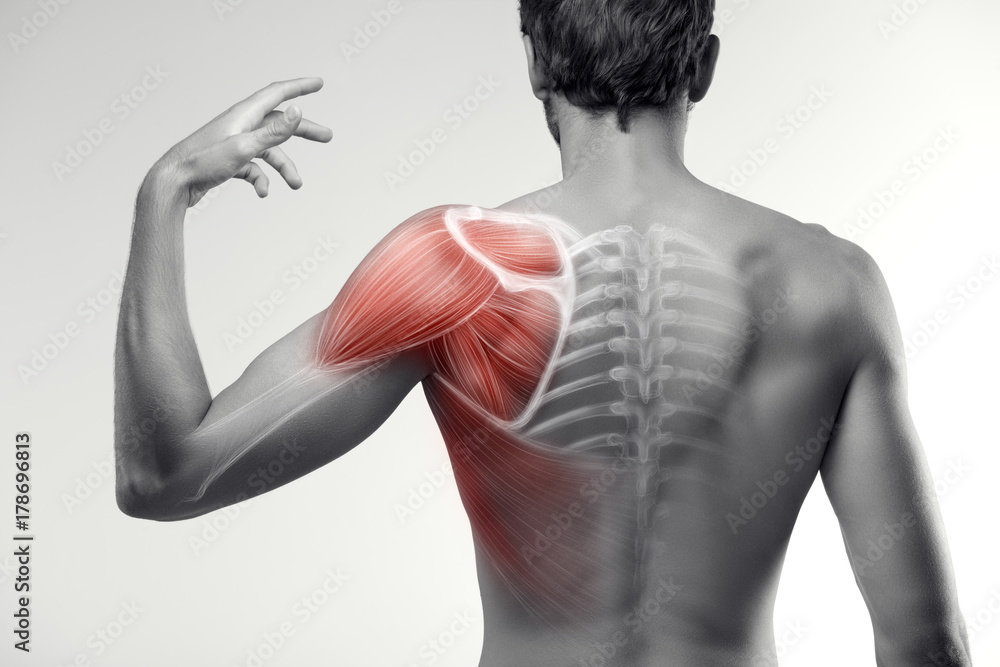 Fototapeta Man view from back. Blades, shoulder and trapezoid illustration.
