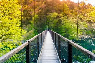 FototapetaOn a suspended bridge in a quiet mountain