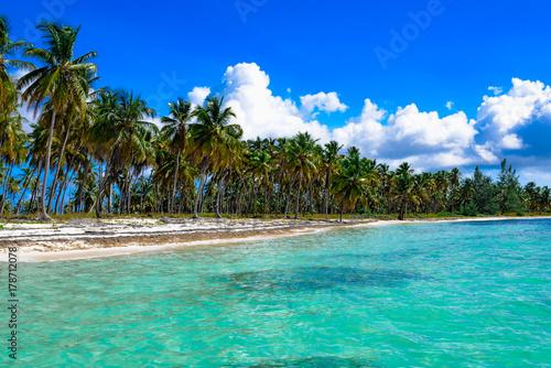 Poster Oceanië paradise tropical beach palm the Caribbean Sea