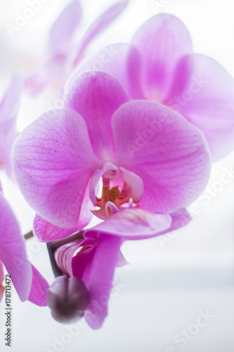 beautiful-pink-orchid