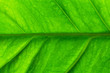green leaf texture pattern. green nature background.