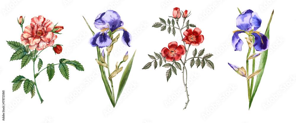 Fototapeta Flowers of iris and roses. Isolated on white background.