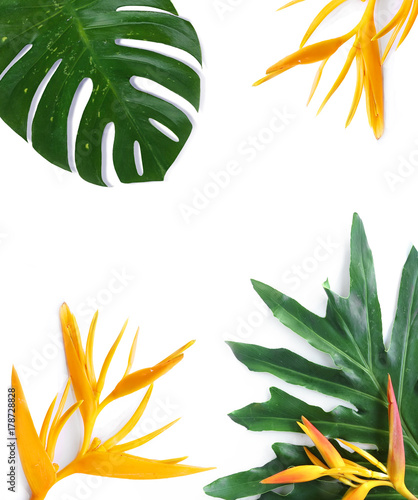 tropical plants  mockup on white background