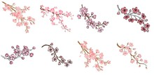 Vector Sakura Branch Illustration Isolated On White Background. Ink Painting For Your Design.