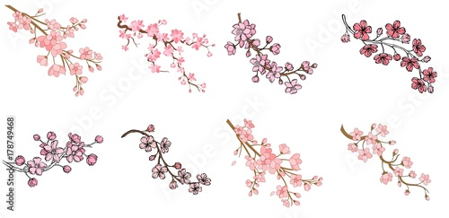 Photo  Vector sakura branch illustration isolated on white background