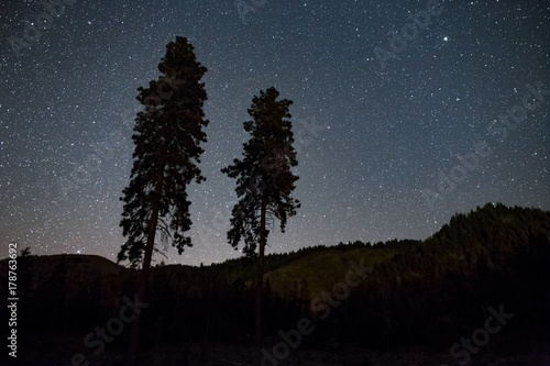 Fotografia, Obraz  Pair of sentinel trees and stars