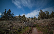 Great Basin Watering Hole By M...