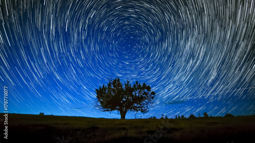 Fotografie, Obraz  North Star Centered Above Juniper Tree Night Sky Star Trails Over Oregon