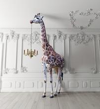 The Giraffe Hold The Chandelier