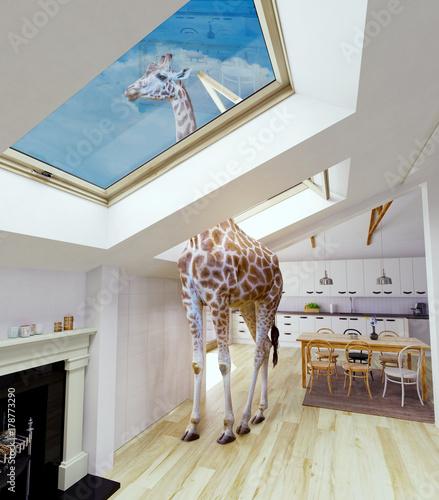Fototapeta premium Żyrafa w oknie strychu