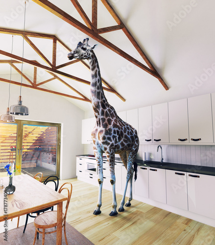 Giraffe in the attic