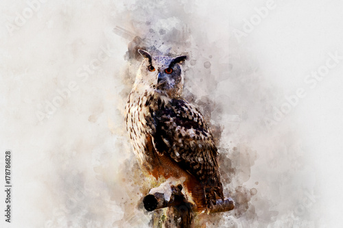 Photo Stands Owls cartoon beautiful painting art watercolor owl