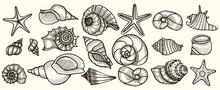 Seashells Vector Set.