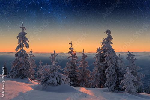 Foto op Aluminium Aubergine Wintry scene with snowy trees