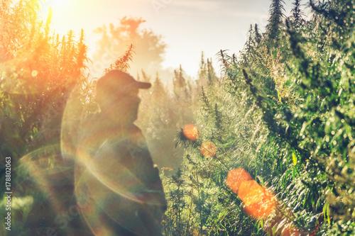 Silhouette of a man on a hemp field in sunlight Wallpaper Mural