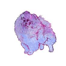 Illustration Of Dog Breed Pome...