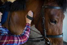 Girl Grooming The Horse In The...