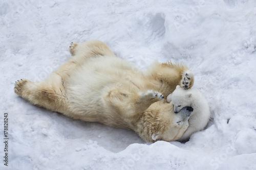 Staande foto Ijsbeer Polar bear with cub
