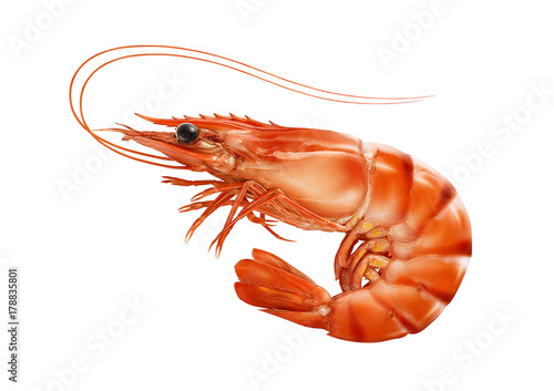 Red cooked prawn or tiger shrimp isolated on white background Wallpaper Mural