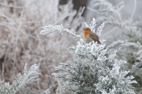 Photo  cute European robin resting on a twig in a park