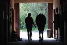 Walking Horse Silhouette