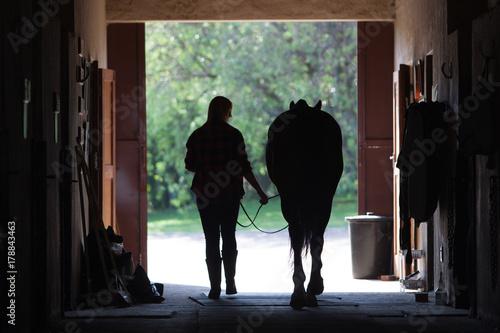 Photo  Walking Horse Silhouette