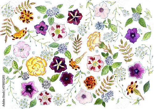 Plakat Akwarela kwiaty i zioła