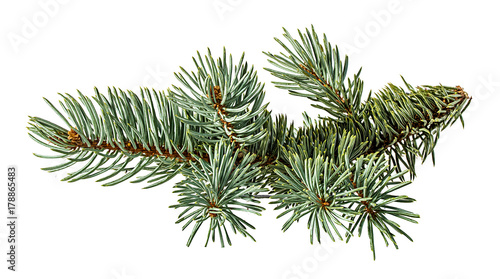 Cuadros en Lienzo Green fir branch on white background with clipping pass
