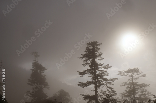 Trees in fog on high mountain pass, Himalayas, Bhutan. Wallpaper Mural