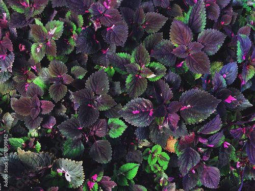 purple tropical leaves pattern buy this stock photo and explore