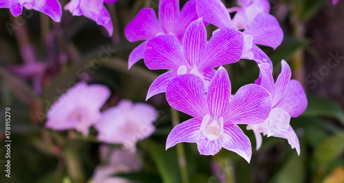 pink-orchid-flowers-background