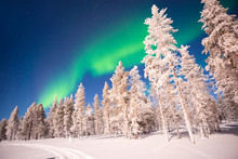 Northern Lights Over Snowy Tre...