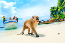 Monkey Beach, Phi Phi Islands,...